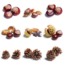 Chestnut Collage Isolated On W...