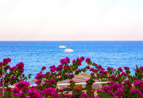 Fototapety, obrazy: View of the Red Sea and southern pink flowers at the resort of Sharm El Sheikh in Egypt