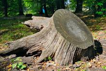 Old Tree Stump In Autumn Park