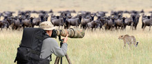 Professional Wildlife Photogra...