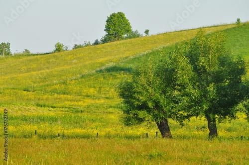 Fotografia  Drzewa