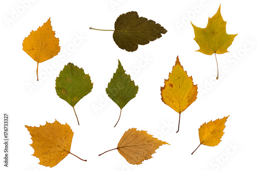 Fotografia, Obraz  dry green and brown leaves on a white background