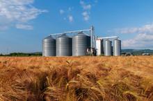 Farm, Barley Field With Grain ...