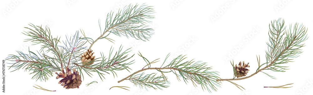 Fototapety, obrazy: Horizontal border with pine branches and cones, needles on white background, hand digital draw, watercolor style, decorative botanical illustration for design, Christmas tree, vector