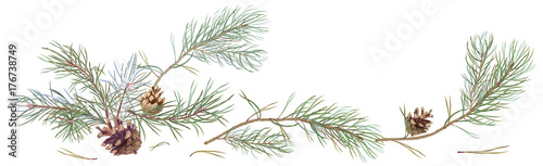Horizontal border with pine branches and cones, needles on white background, han Fototapeta