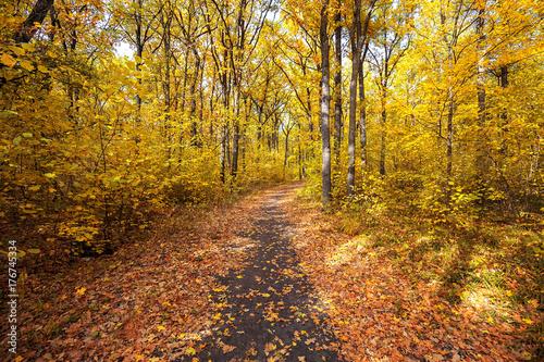 Tuinposter Weg in bos autumn road through deciduous forest