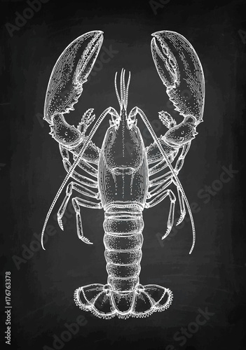 Leinwand Poster Chalk sketch of lobster