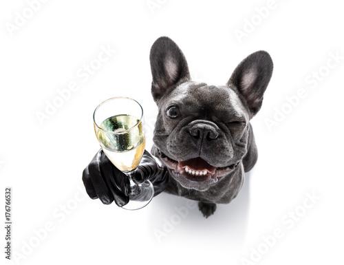 Foto op Plexiglas Franse bulldog happy new year dog celberation