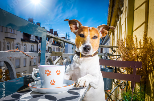 Photo Stands Crazy dog dog having a coffee break