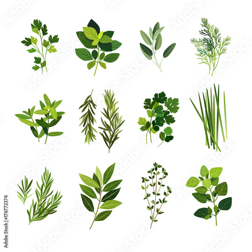 Tableau sur Toile Clip art illustrations of common culinary herbs such as parsley, basil, sage, di