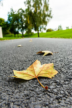 Dry Leaves On The Road. Close-up View Of Dead Maple Leaves Lying On A Small Asphalted Road With Shallow Depth Of Field And A Blurry Countryside Background With Trees And Grassland.