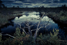 Mystery Dark Swamp Or Pond At Dusk, Landscape Of Night Spooky Forest