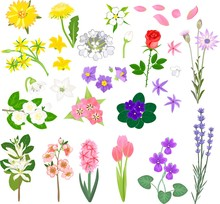 Set Of Different Flowers On Wh...