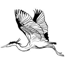 Vector Tattoo Sketch Flying Stork Illustration