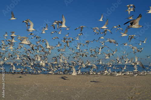 Flying Flock of Birds