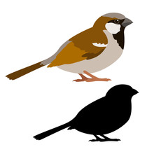 Sparrow Vector Illustration St...