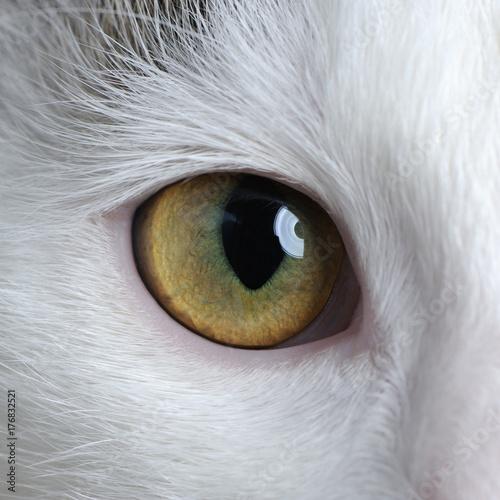 Photo  Cat Eye Close-Up