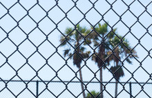 Chain Link Fence In Prison, Gulag, Labour Camp, School Or Unwanted Institution. Dreaming Of Freedom. Palm Trees In Background.