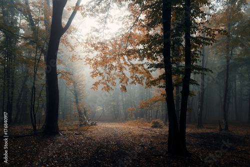 Fotobehang Zwart autumn in misty forest