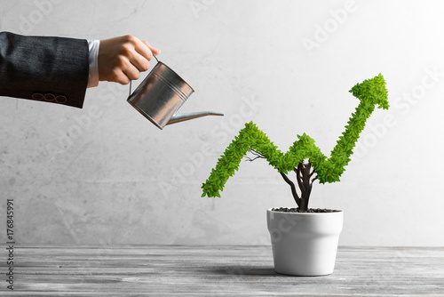 Fototapeta Concept of investment income and growth with tree in pot obraz