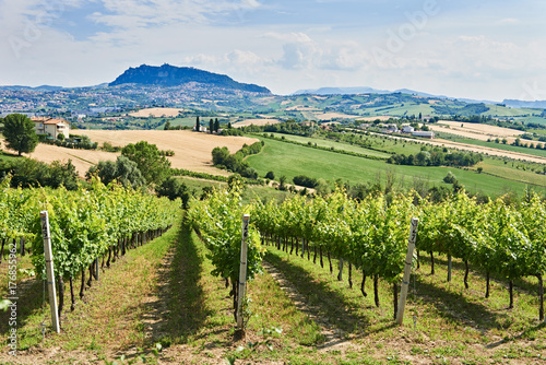 vineyard with monte titano of san marino background