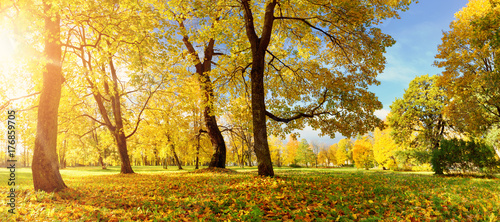Canvas Prints Honey trees with multicolored leaves in the park
