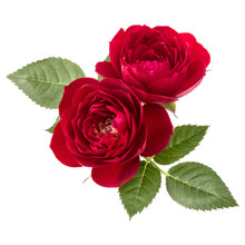 Two Red Rose Flowers  Isolated...