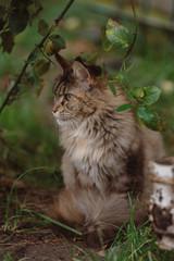 Naklejka na ściany i meble cats in the garden