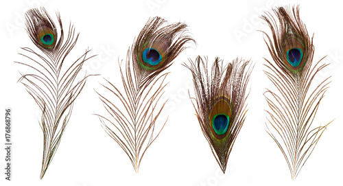 Valokuva  set of beautiful and colorful peacock feathers isolated on white background