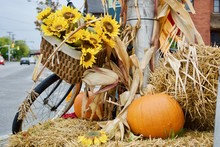 Beautiful Autumn Theme With Bicycle, Orange Pumpkins, Yellow Hay And Colourful Sunflower