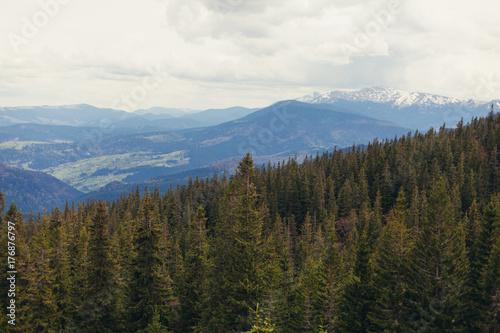 Fototapeten Wald landscape in mountains Carpathians Ukraine