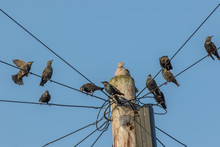 Common Urban Bird Pests. Pigeo...