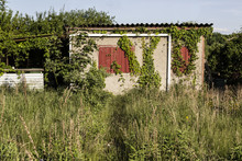 Hut In Overgrown, Unkempt Garden