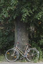 Brown Bicycle Parked Under A Tree