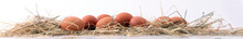 Egg. Fresh Farm Eggs On A Whit...