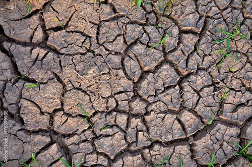 Plakat Susza ziemi. Jałowa ziemia. Suchy krakingowy ziemski tło. Pęknięty wzór błota.