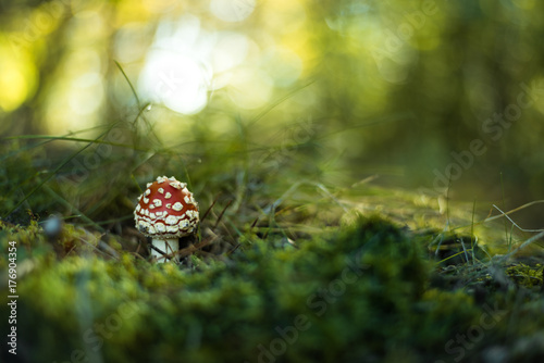 Photo Fly agaric or fly Amanita mushroom in forest close up