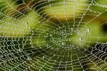 Detail Of Beautiful Cobweb Wit...