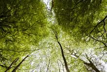Green Tree Canopy