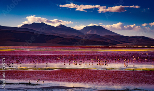 flamingos standing in a pink lagoon with mountain behind