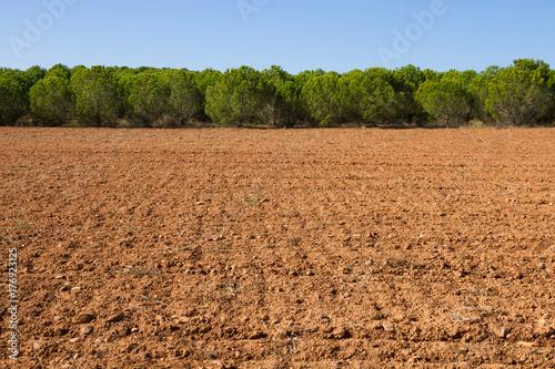 Foto  Terreno agricola de tierra arada con plantación de pinos
