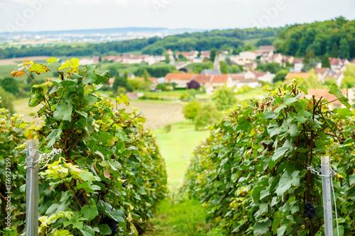 In de dag Lime groen Row vine grape in champagne vineyards at montagne de reims on countryside village background, France