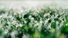 Close Up Of Dew On Grass