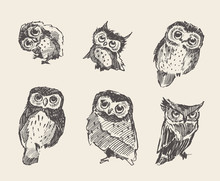 Set Vector Drawn Owls Vintage Style