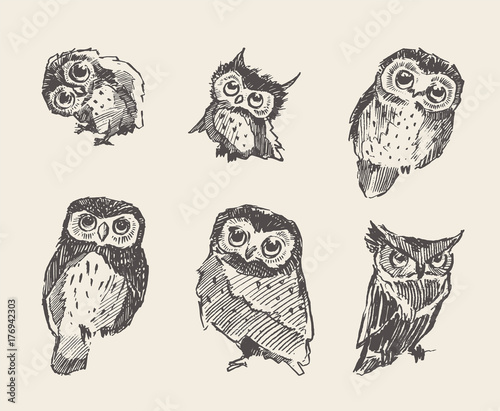 Photo Stands Owls cartoon Set vector drawn owls vintage style