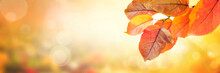 Sunny Autumn Day With Fallen Colorful Leaves Background