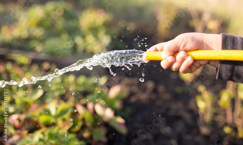 Fototapeta splashing water from a hose in the garden