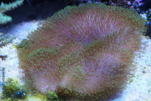 Staande foto Koraalriffen sea