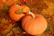 Autumn Still Life: Two Pumpkin...