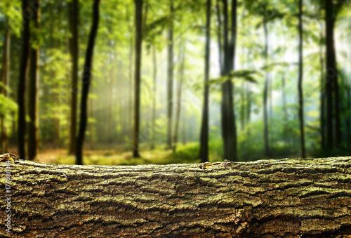 Fotografia  Nature background